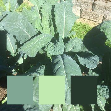 Pesky-Greens-4-360x360
